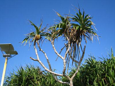 南国の植物と青い空