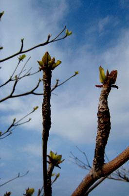 天に向かって伸びる新芽