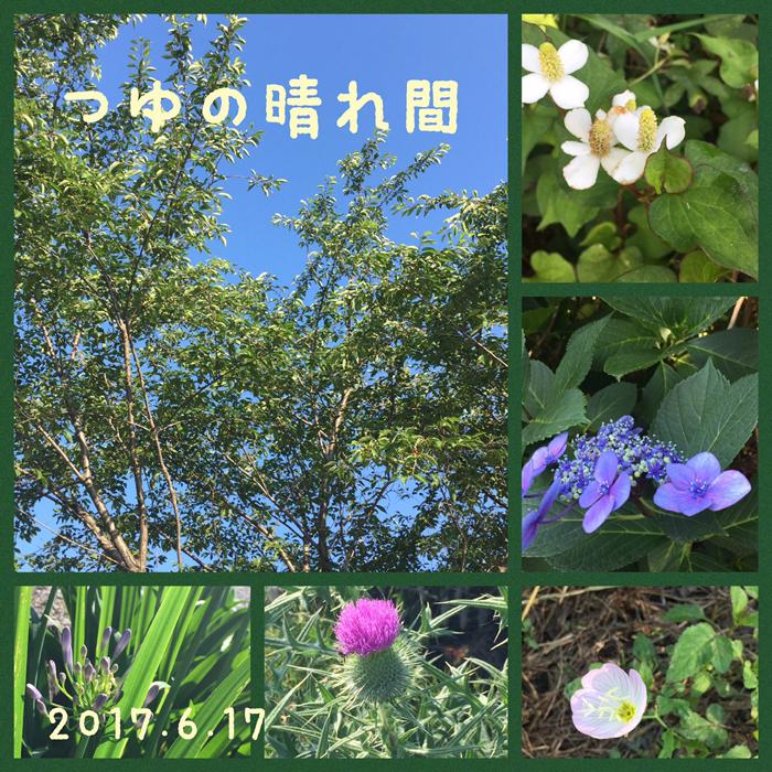 梅雨の晴れ間 2017.6.17早朝