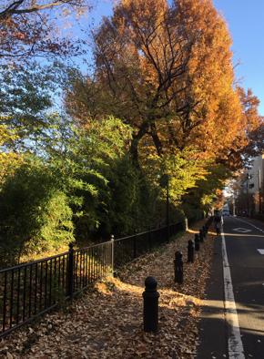 玉川上水沿いの道の紅葉