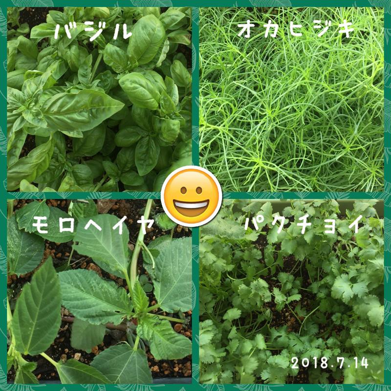 夏野菜を食べて元気です