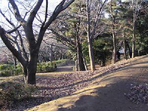 飛鳥山公園5