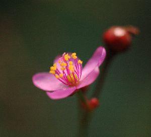 直径8mm位の小さな花です