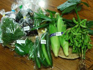 夏野菜の美味しい季節です