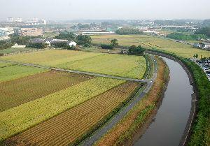 稲刈り直後の初秋の田んぼ・・・上から見るとパッチワークのようです