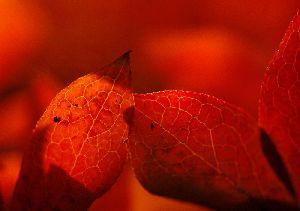 朱の中の紅