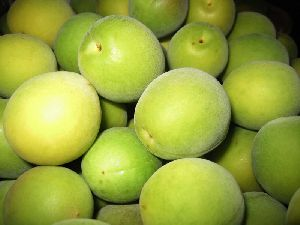梅干用の熟した梅