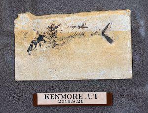 2011.8.21 採取した化石