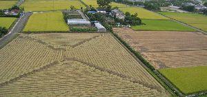 稲刈り直後 パッチワークのような田んぼの風景2012.9.8