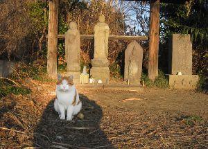 野良猫ミーちゃん(2014.1.24)