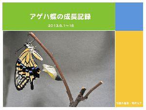 アゲハ蝶の成長記録をスライドショーにしました
