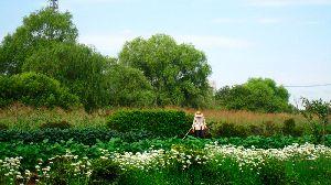 農家さんの畑の周りには沢山のニラの花が咲いています