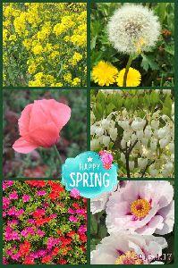 春爛漫 近所に咲いていたお花たち・・・