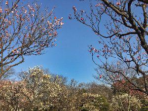 大宮第二公園 2016.2.19