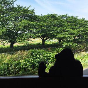 珈琲豆屋さんから見る見沼田んぼの景色